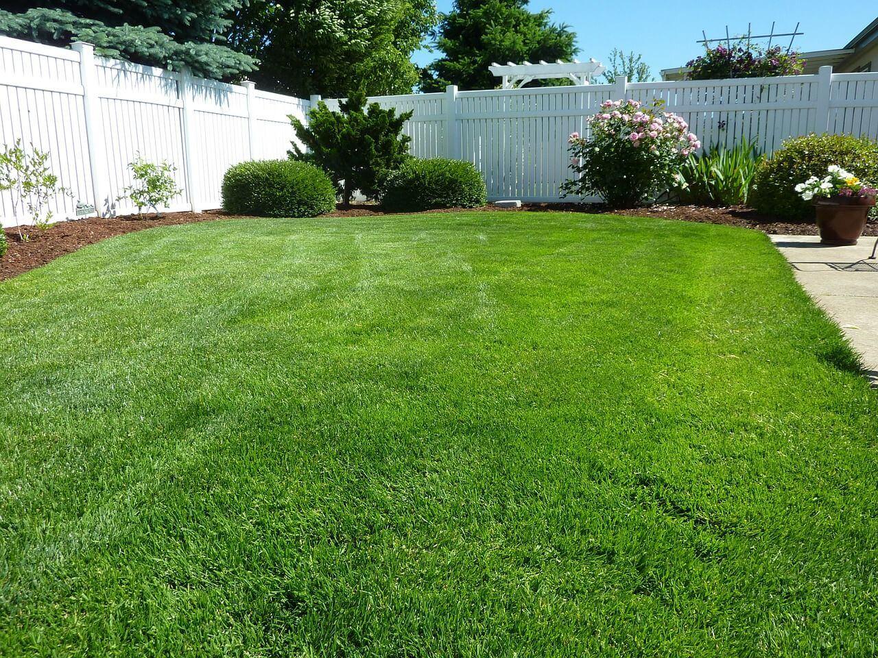 Backyard grass Richmond