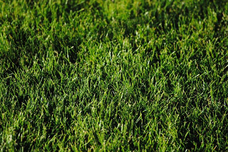 Freshly cut grass in Hawthorn